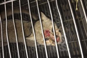 OM: A dicidi cu lo no mata e bestianan exotico captura