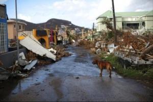 Animal Care Clinic cu colecte pa mascotanan di Sint Maarten