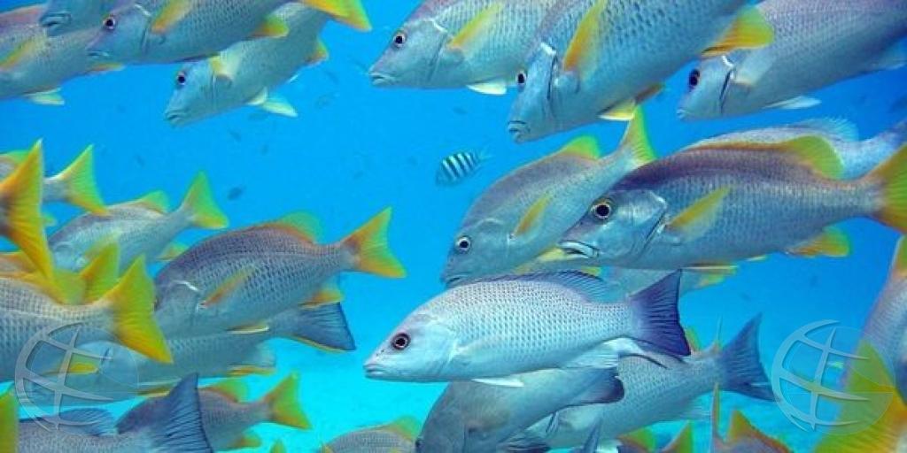 NGO's: Parke Marino Nobo na Aruba no ta proteha e area mas vulnerabel