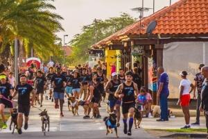 Bestial dogwalk & Bestial kids Race patronisa pa Pro plan ta cla pa ranka sali