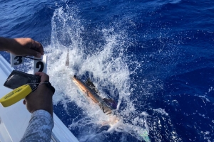 Team BZN a gana di 46 International Billfish Tournament di Bucuti Yacht Club
