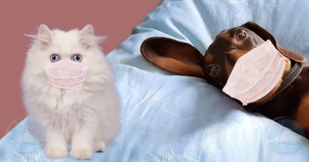 Veterinario Croes: Si bo tin COVID-19, limita contacto cu bo mascota