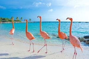 Flamingonan di Renaissance Island di Aruba scogi como #1 pa Photo shoot durante pandemia